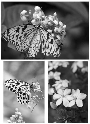 TSS - Butterfly and Flowers Photo Stamps